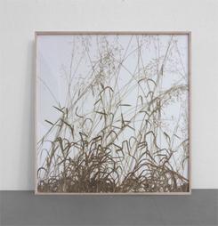 <b>herman de vries</b><br> Rasenstück, 2009<br> Milium effeusum vom Großen Knetzberg<br> auf Karton befestigt<br> signiert, datiert, bezeichnet<br> 102 x 102 cm