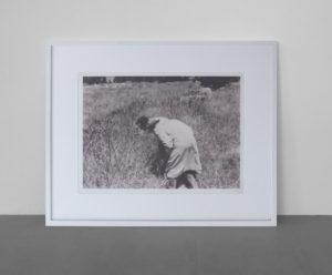 <strong>Joseph Beuys </strong> <br>  Botanischer Wahnsinn, 1976<br> Lichtdruck auf Karton, 4/200<br> signiert und nummeriert<br> 66,8 x 90 cm<br> Photo und Edition: Heiner Bastian, Berlin